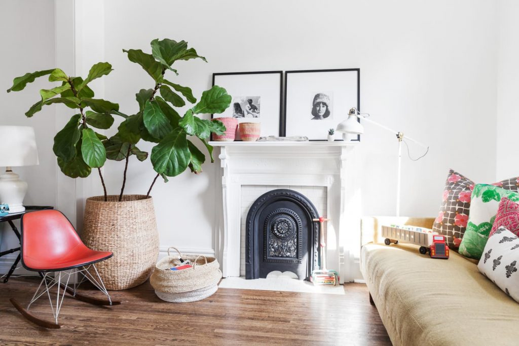 A large fiddle leaf fig tree in a living room.